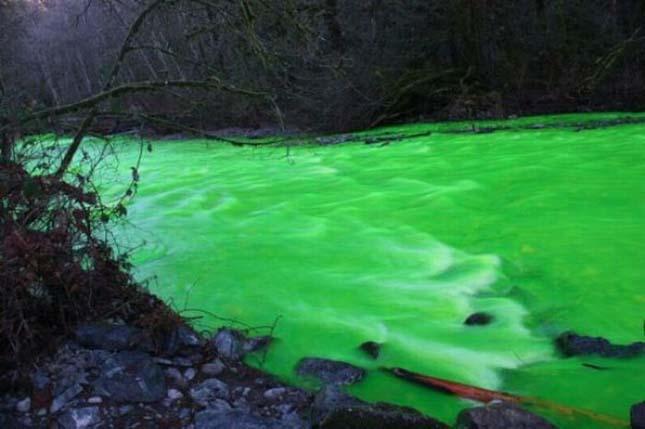 Neonzöld színű Goldstream folyó