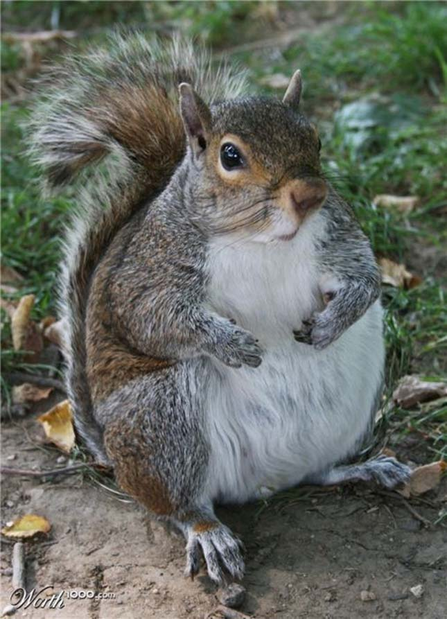 Kövér állatok