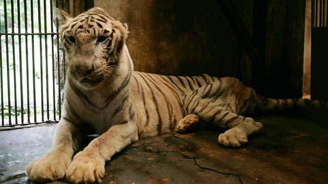 Surabaya állatkert