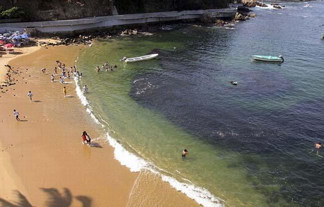 Halrajok lepték el a mexikói tengerpartot