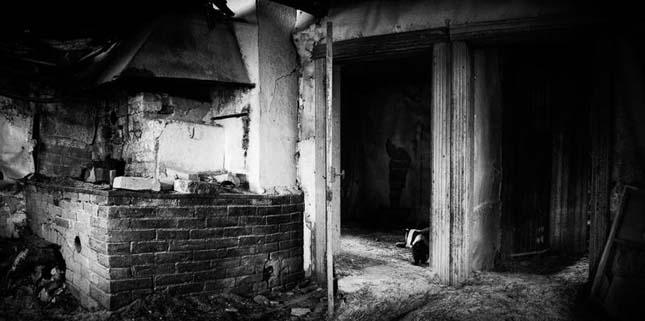 Állatok elhagyott faházban