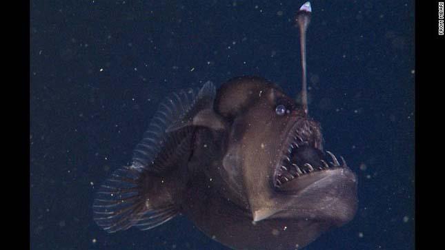 Horgászhal