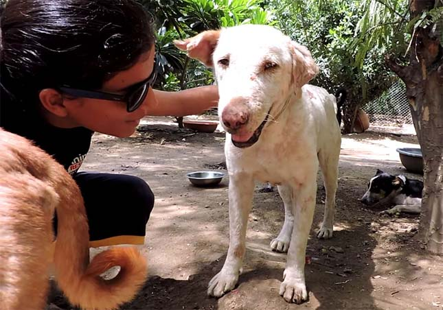 Megmentett kutya