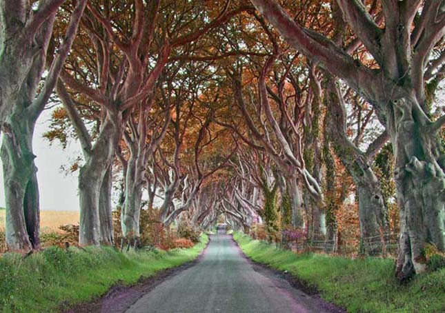 Sötét és ijesztő erdő Írországban