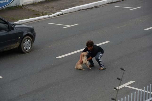 Kisfiú mentette meg az elütött kutyát