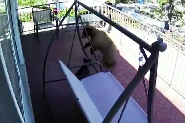 Kiskutya kergette el a medvéket