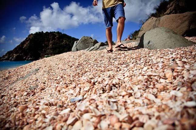 Kagylóval borított tengerpartok