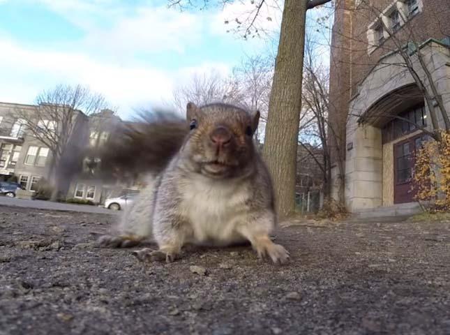 Kamerázó mókus