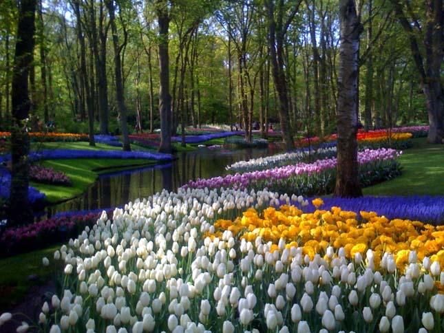 Keukenhof, tulipánkert Hollandiában