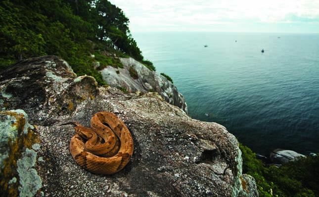 Kígyó-sziget