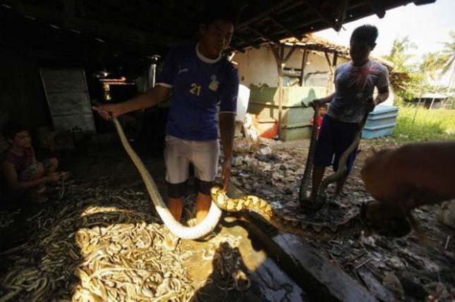 kígyóbőr-táska készítése
