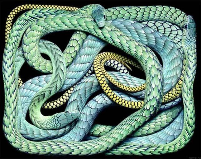 látvány, mint egy kígyó