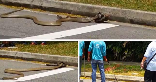 Kígyók harca