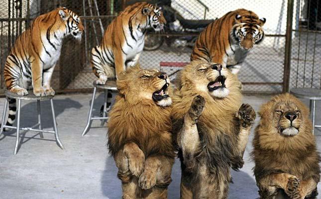 Borzalmas állatbemutatók