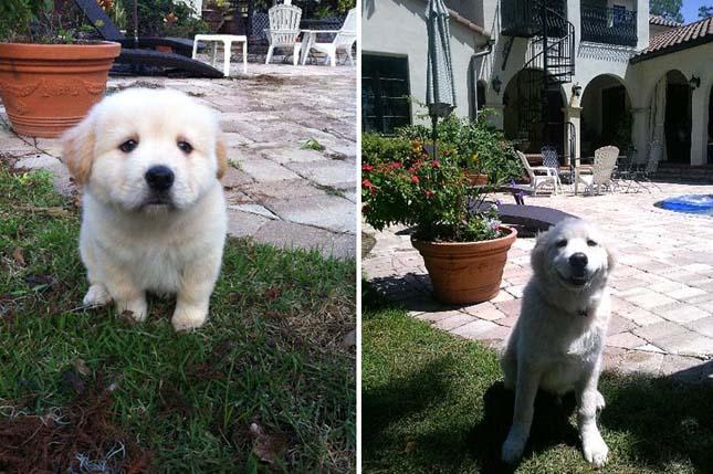 Kutyák akkor és most fotói