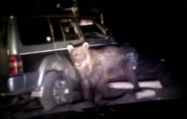 Vadászok ütöttek el egy medvét Oroszországban