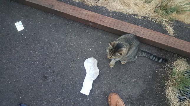 Kleptomániás macska