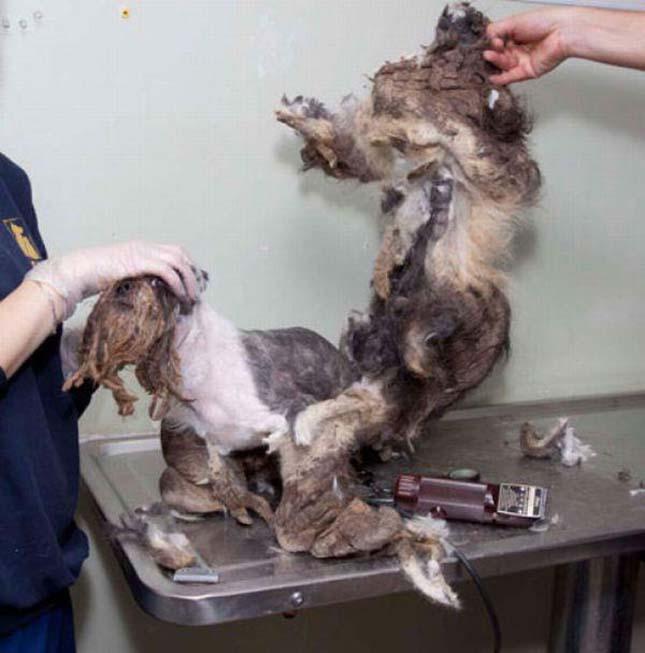 Megmentett kiskutya