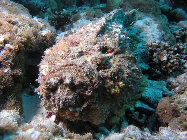 Kőhal