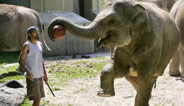 Kosárlabdázó elefántok