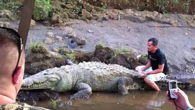 Krokodil túra