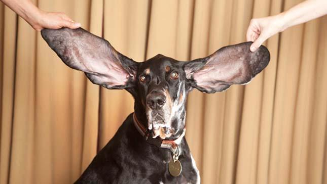 Rekorder kutyák