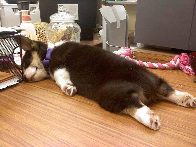 Alvó kutyák