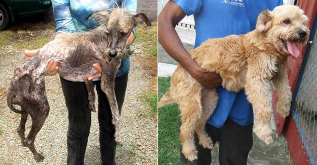 Kutyák befogadásuk előtt és után