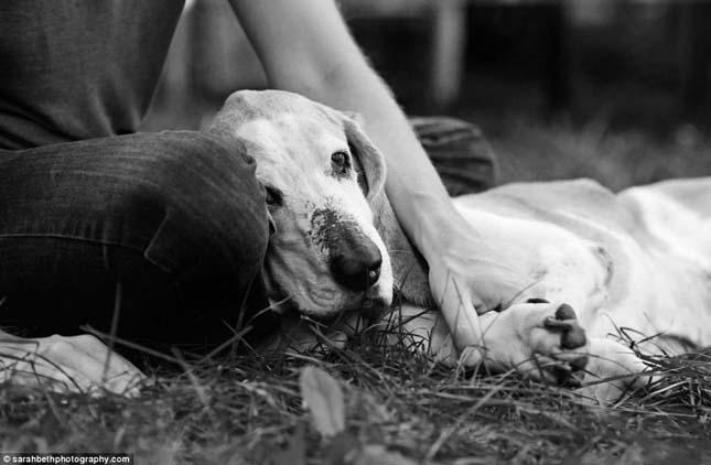 Kutyák elaltatás előtt