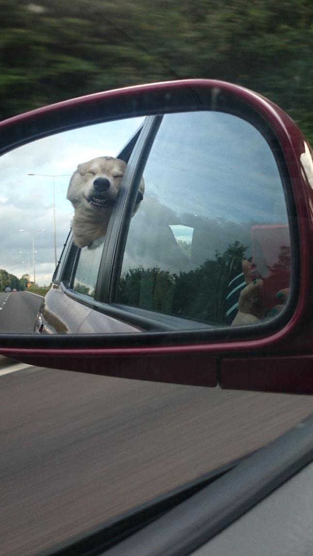 Kutyák a menetszélben