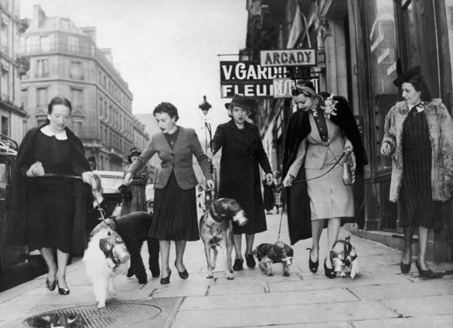 Kutyák gázmaszkban