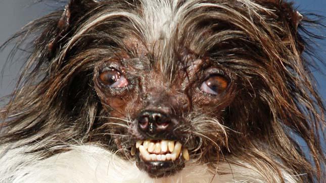 A világ legcsúnyább kutyája 2014
