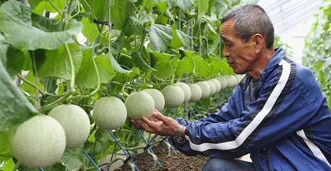 A legdrágább gyümölcsök