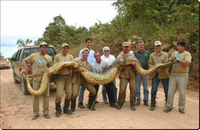 A legnagyobb kígyó -Anakonda