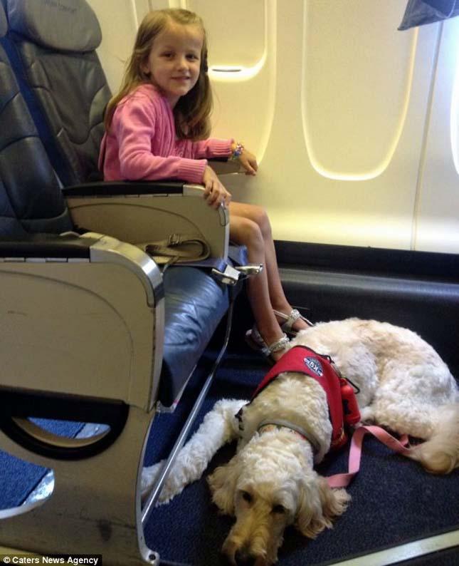 LilyBelle, az életmentő kutya