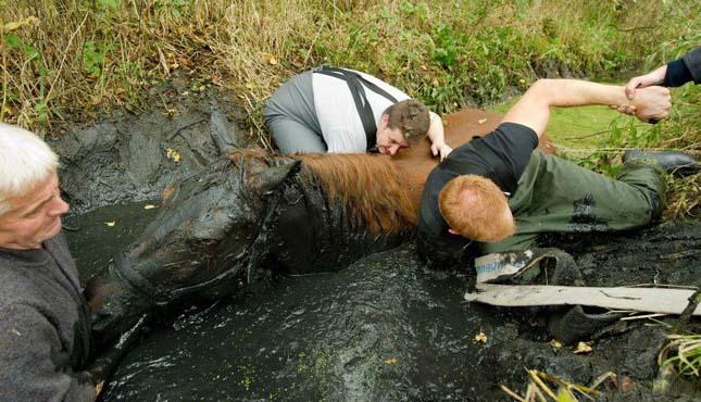 Ló a mocsárban