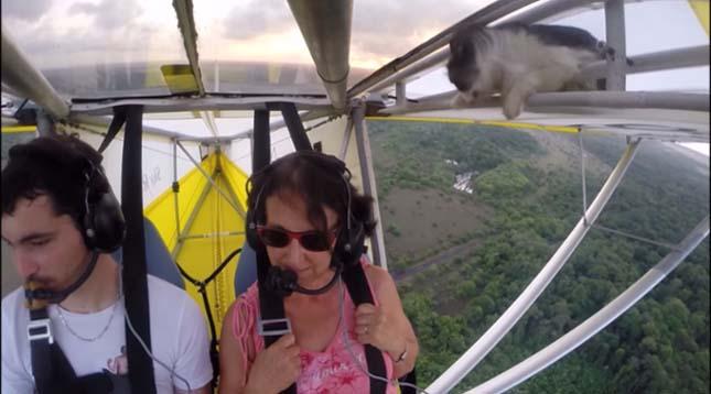 Macska a kisrepülőn