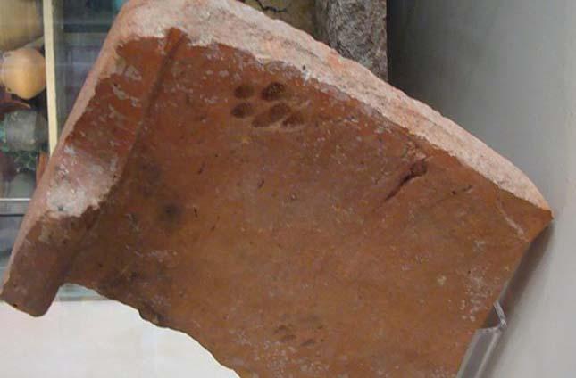 Kétezer éves macskalábnyomok