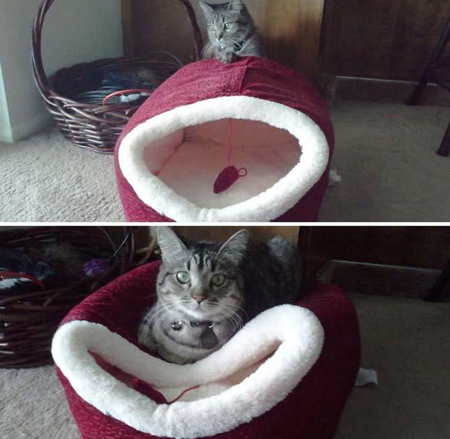 Macskák logikája