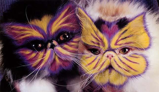 macska befestése