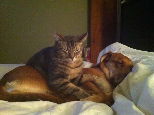 Párnának használják a macskáka kutyákat