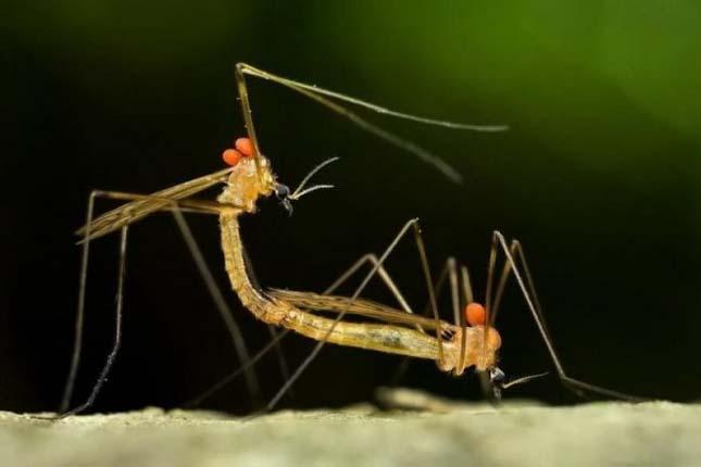 Makrofotók bogarakról