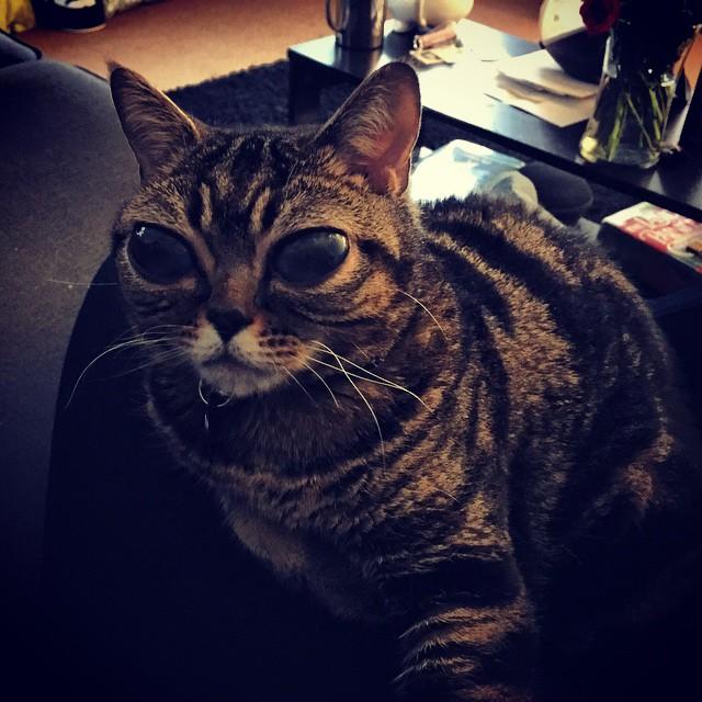 Matilda, az úfó szemű macska