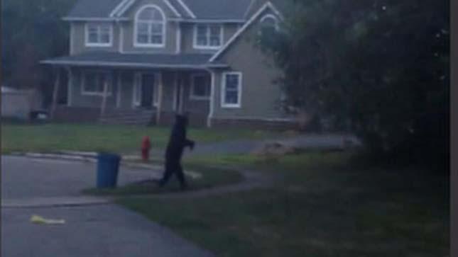 Két lábon járó medve
