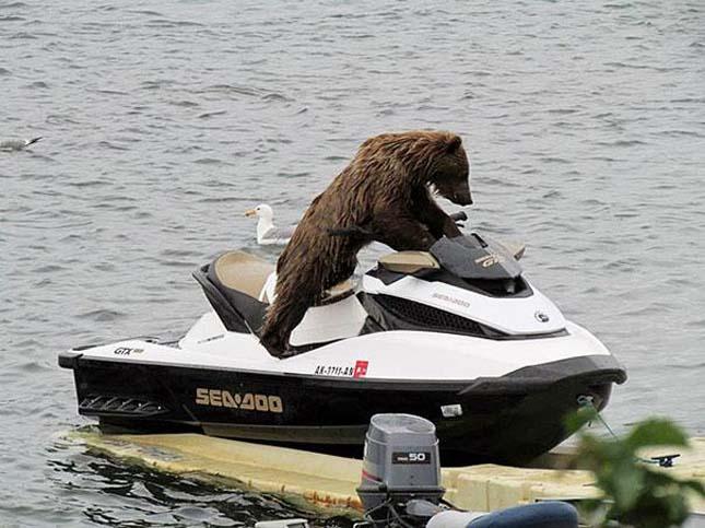Medvék