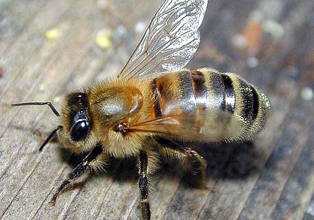 Méhészverseny, Kína