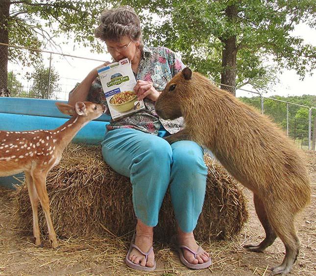 Különleges állatbarátságok
