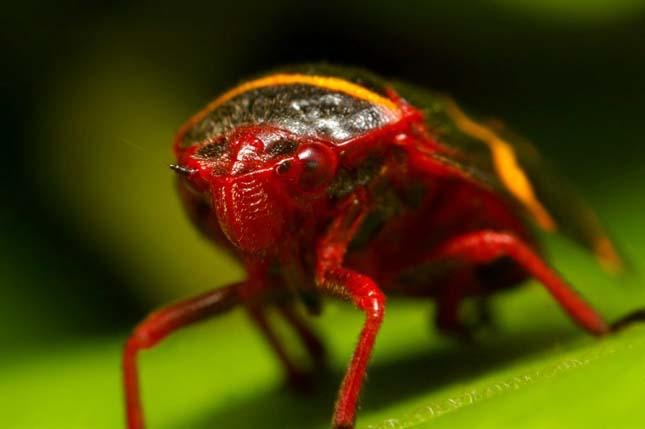 Apró rovar - A mikrokozmosz világa