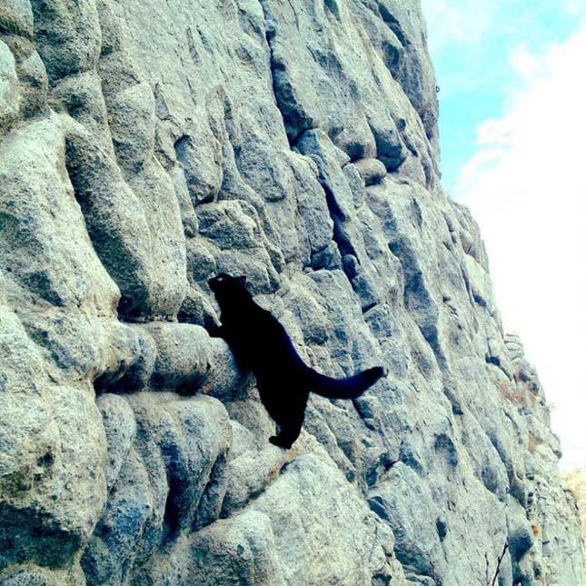 Millie, a hegymászó macska