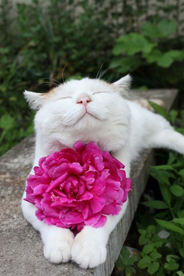 Mosolygó cicák